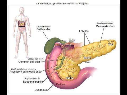 Aliments Qui Protègent Le Pancréas Et Luttent Contre Le Diabète