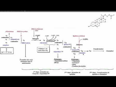 Anabolisme Du Cholestérol