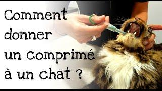 Comment donner un comprimé à son chat ?